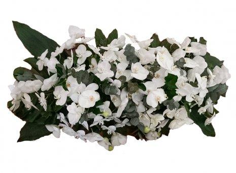 Kistbedekking 'Orchid Heaven White'
