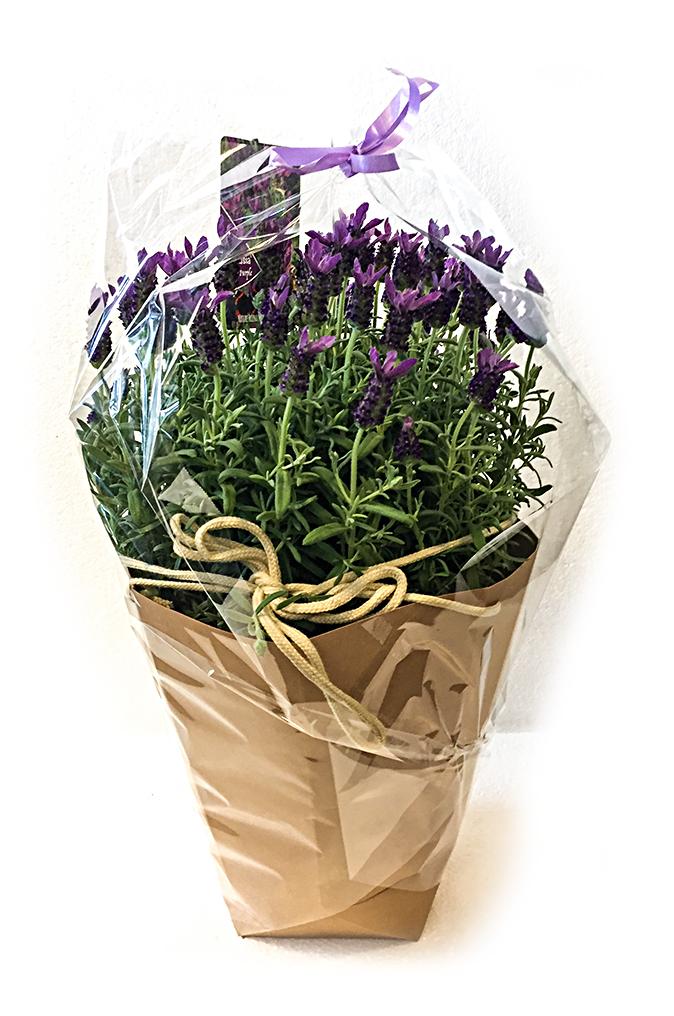 Lavendel In Grote Pot.Lavendel In Pot Shopbag Voort Bloemen