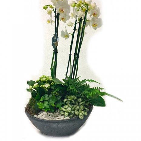 Orchidee Paradise